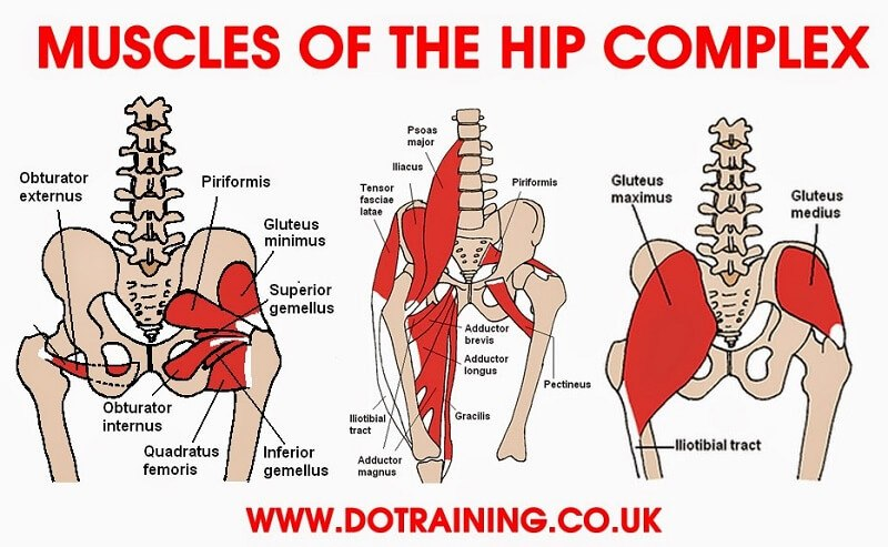 hip flexibility_muscles-of-hip